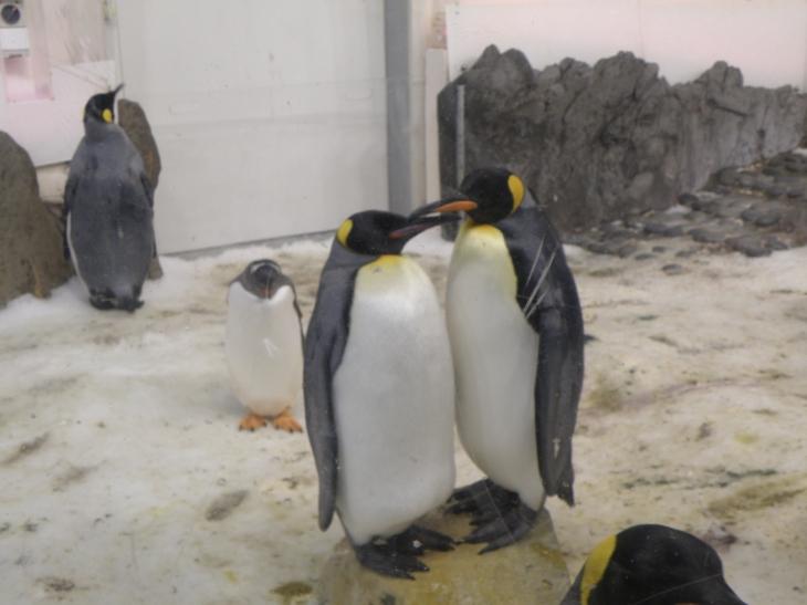 Pingouins au Melbourne SeaLife