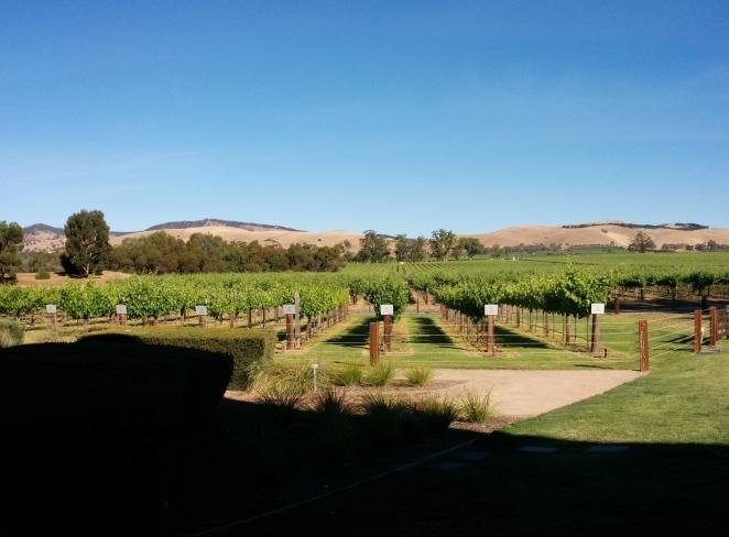 Jacob's Creek vineyard