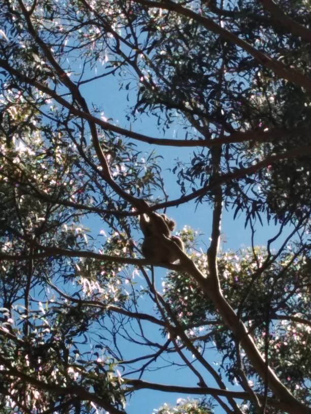 Et en regardant dans les arbres...