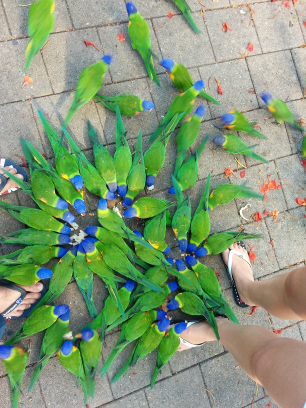 Rainbow lorikeets, Bungalow Bay sur Magnetic Island, Townsville, Queensland