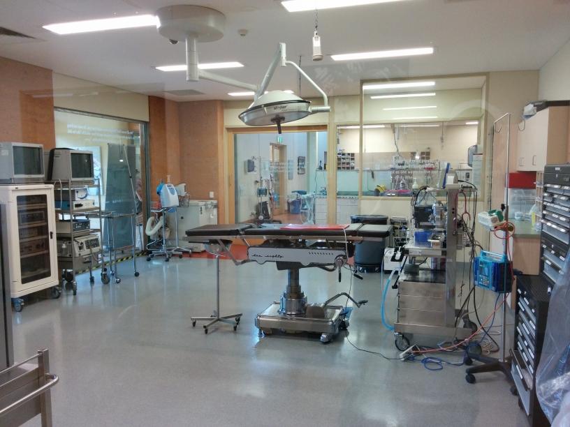 Hôpital pour animaux sauvages accidentés, Australia Zoo, Queensland