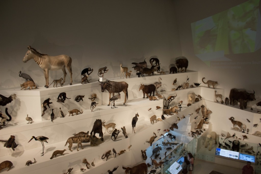 Animaux empaillés au Melbourne Museum